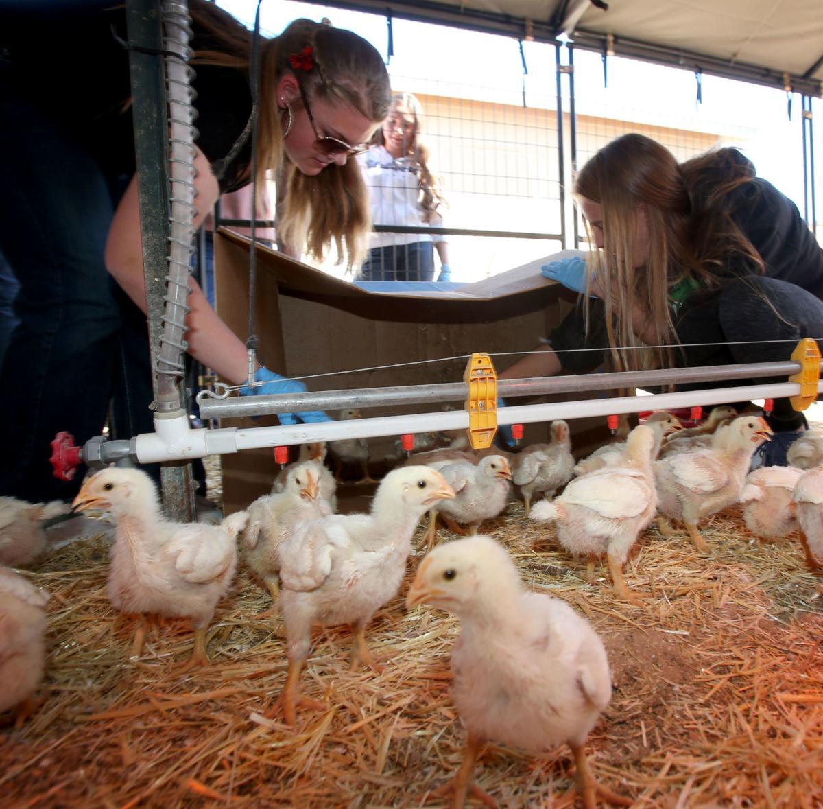 CGUHS poultry program