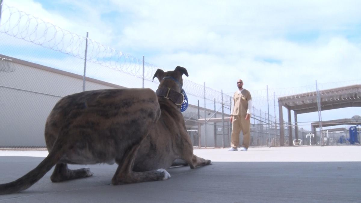 Greyhound rehabilitation program