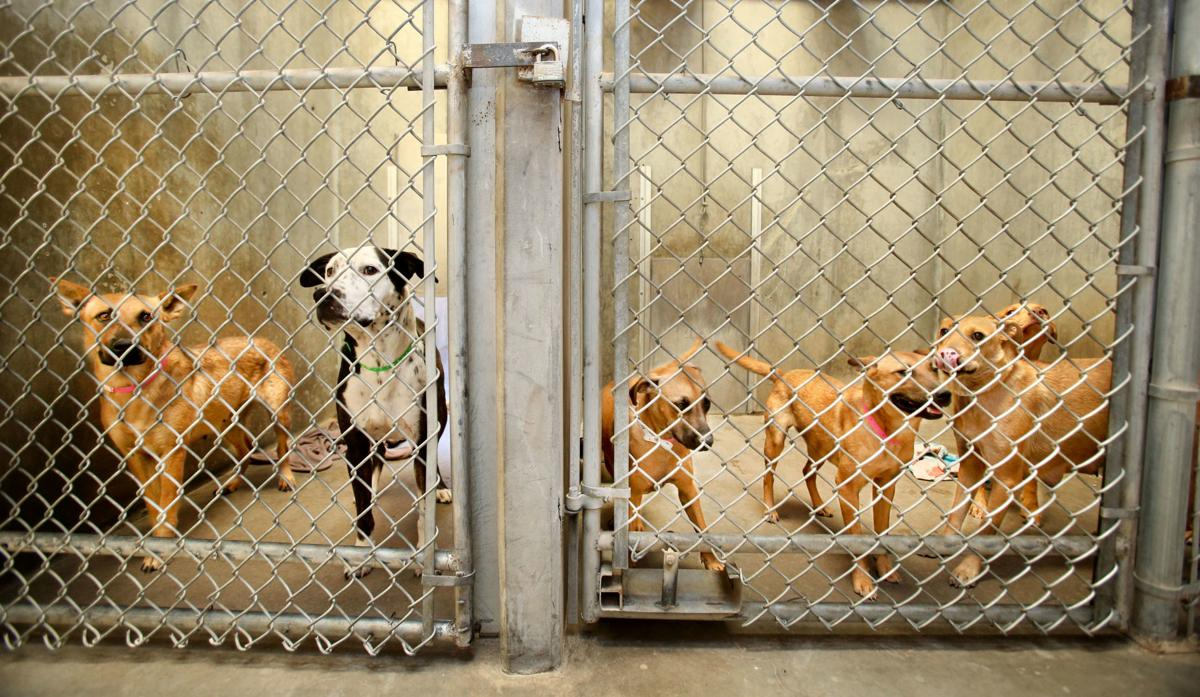 Animal Care & Control overcrowding