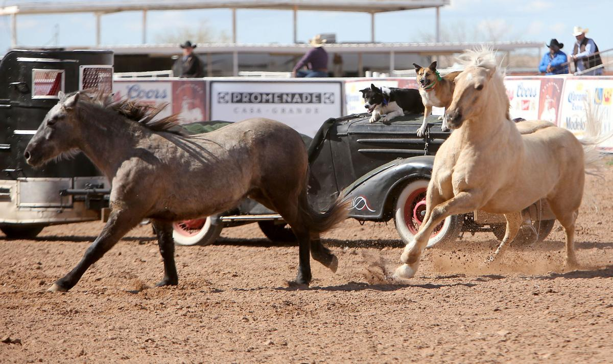 O'Odham Tash rodeo 2/16/19 | Featured | pinalcentral.com on