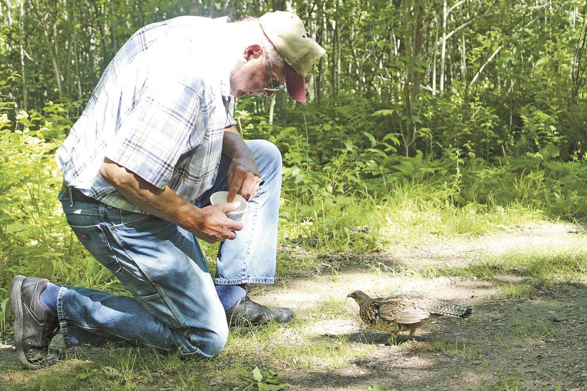 Wild ruffed grouse forms fast friendship with Pine County man