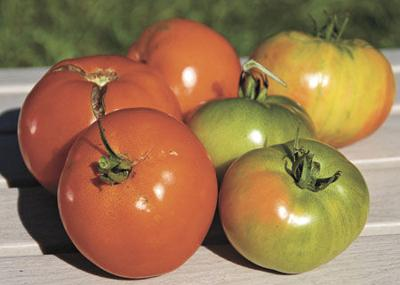 Get the most out of your tomato harvest