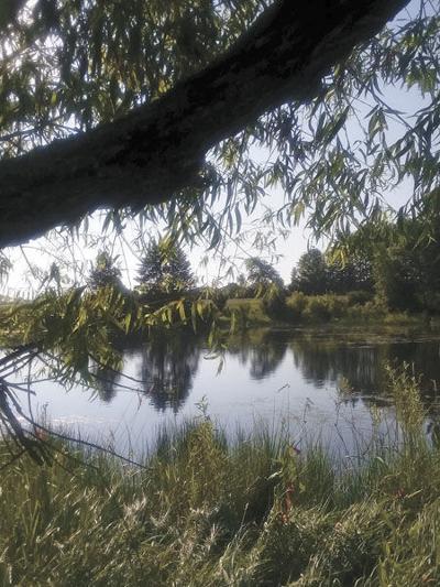 Nature sets a summer scene