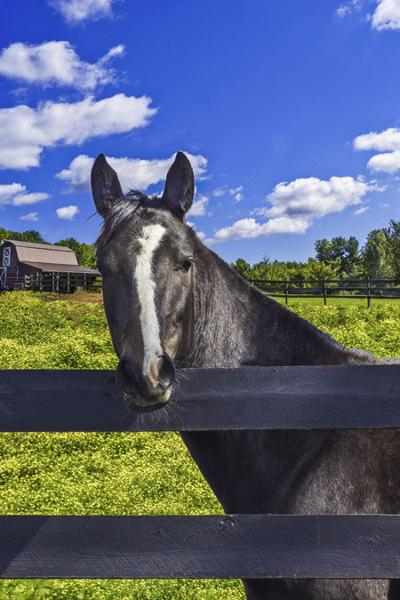 Tests find equine disease in Pine County horses