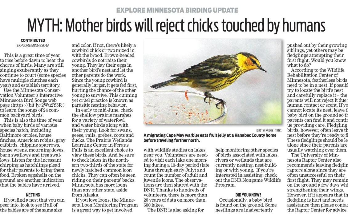 Explore Minnesota Birding Update MYTH: Mother birds will reject chicks touched by humans