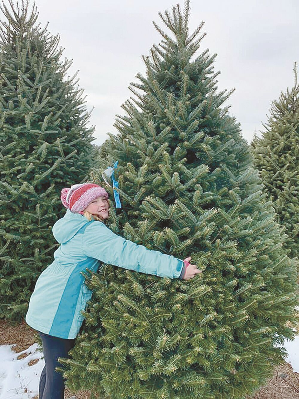 Tis the season to visit a Pine County tree farm1