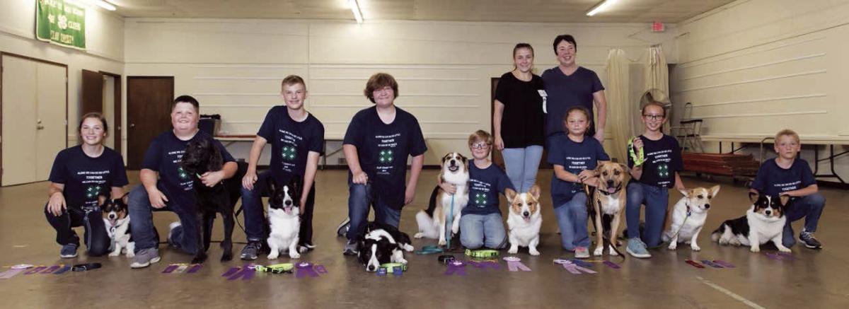 Dog Show Group