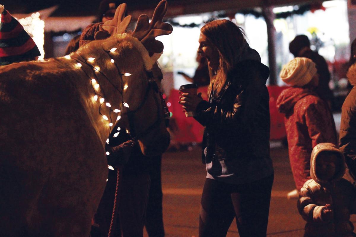 Horse Or Reindeer?
