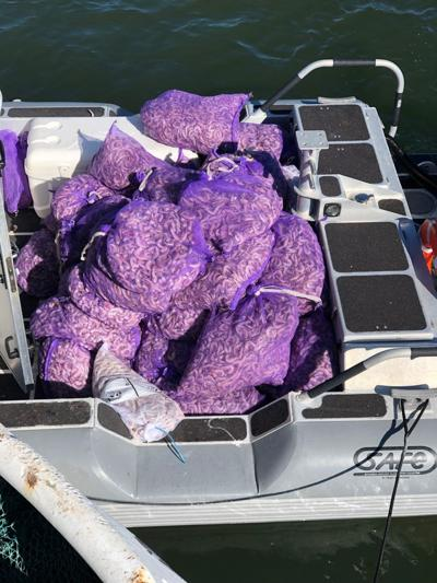 1,800 pounds of shrimp