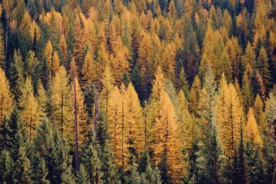 Autumn forest color