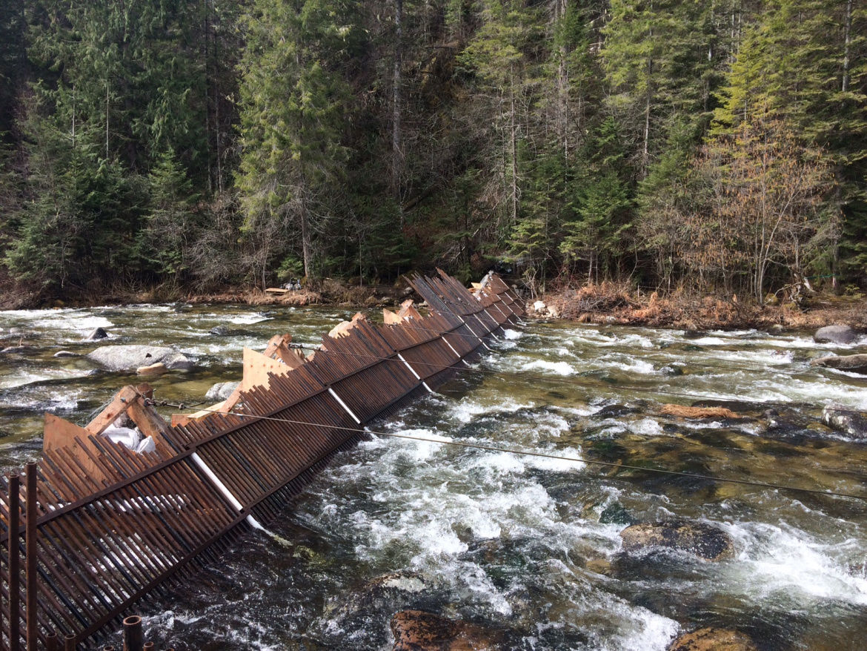Steelhead show signs of rebounding in Idaho