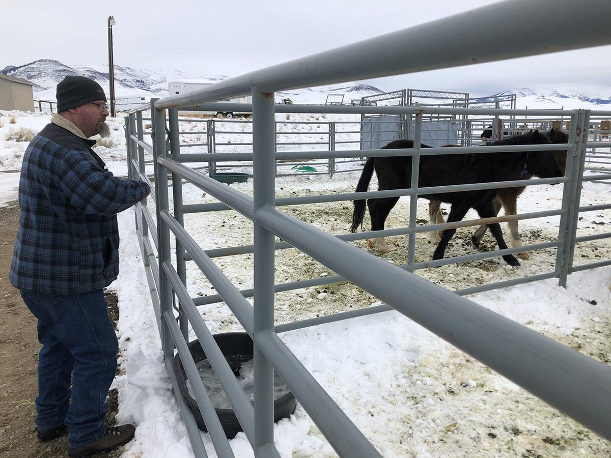 BLM tests new fertility control on wild horses