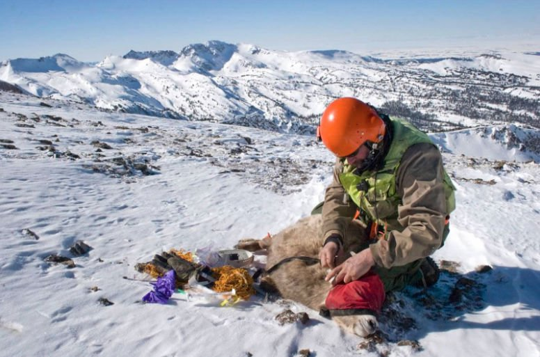 Losing sleep over sheep: Solving the thorny problem of mixing bighorn sheep and backcountry skiers
