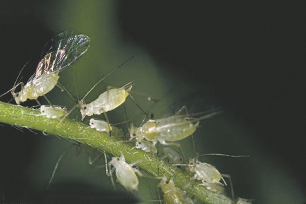 bug1109