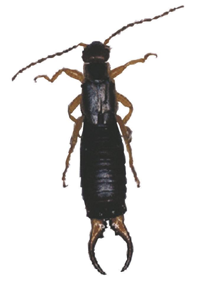 bug824Cutout