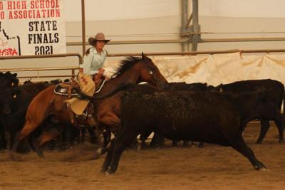 Girls Cow Cutting Finals