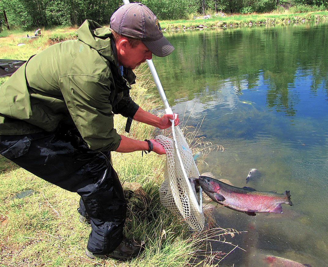 Giant trout stocked in Challis pond