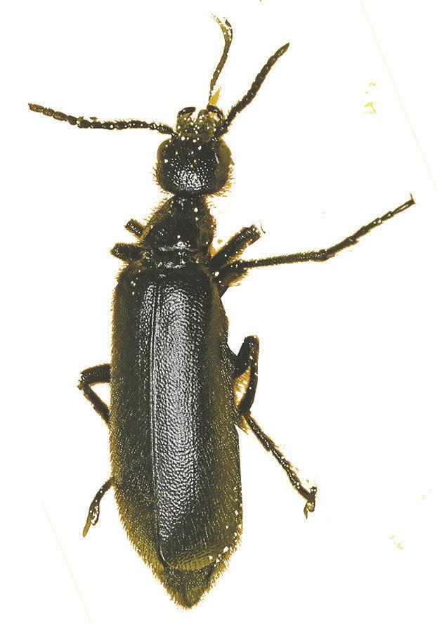 bug405Cutout