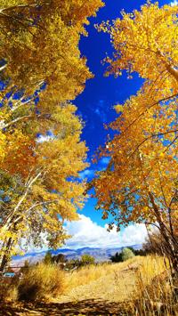 Fall colors ablaze in Challis