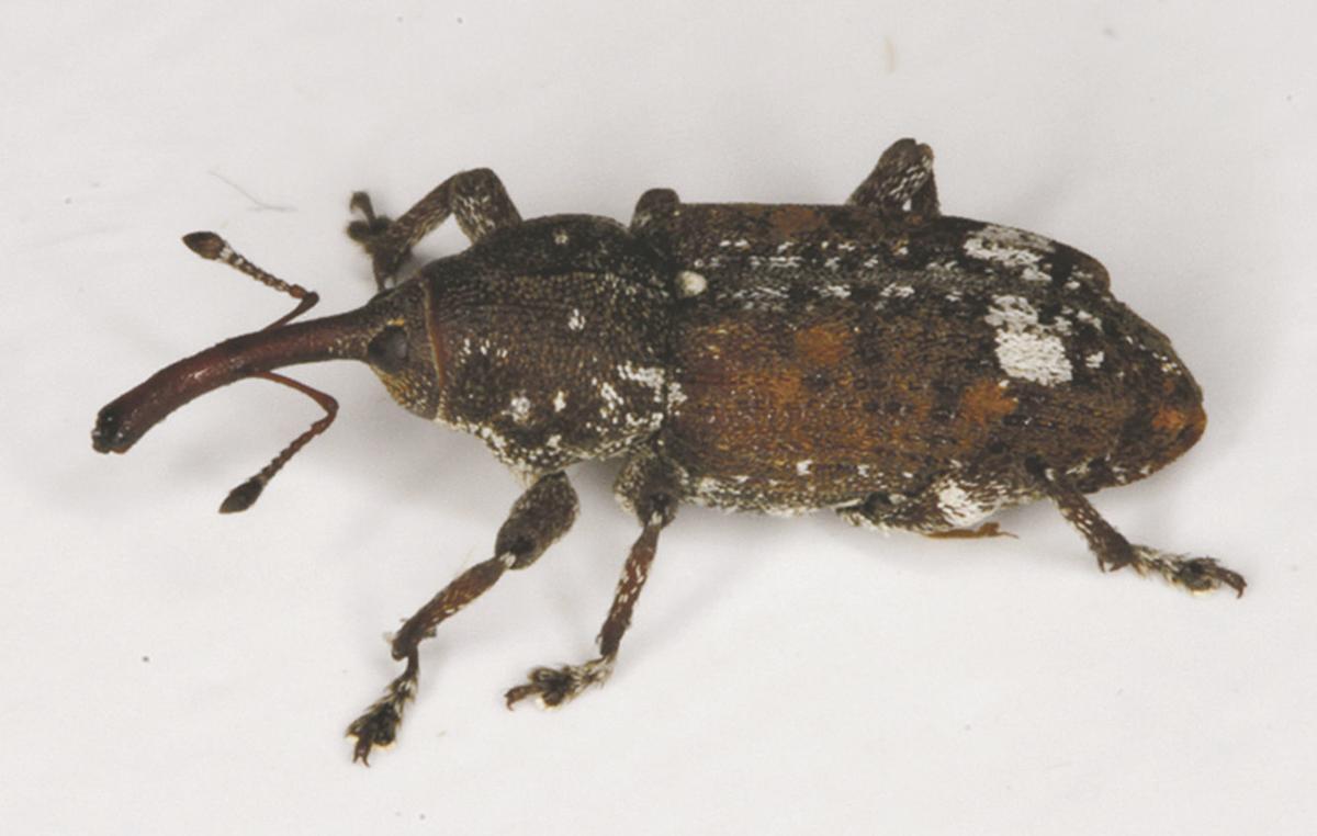 bug1207