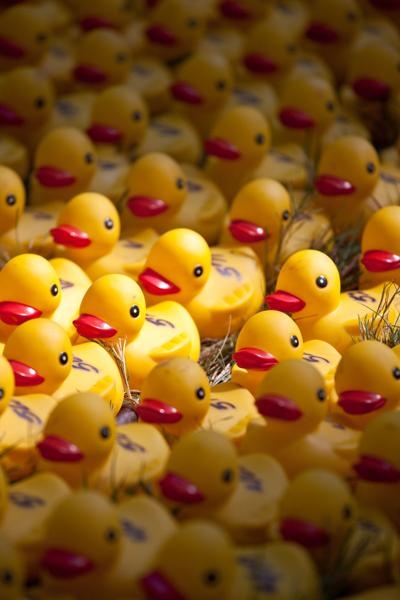 Sunlight on rows of duckies