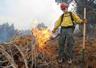 BLM clearing junipers on east bench prescribed burn