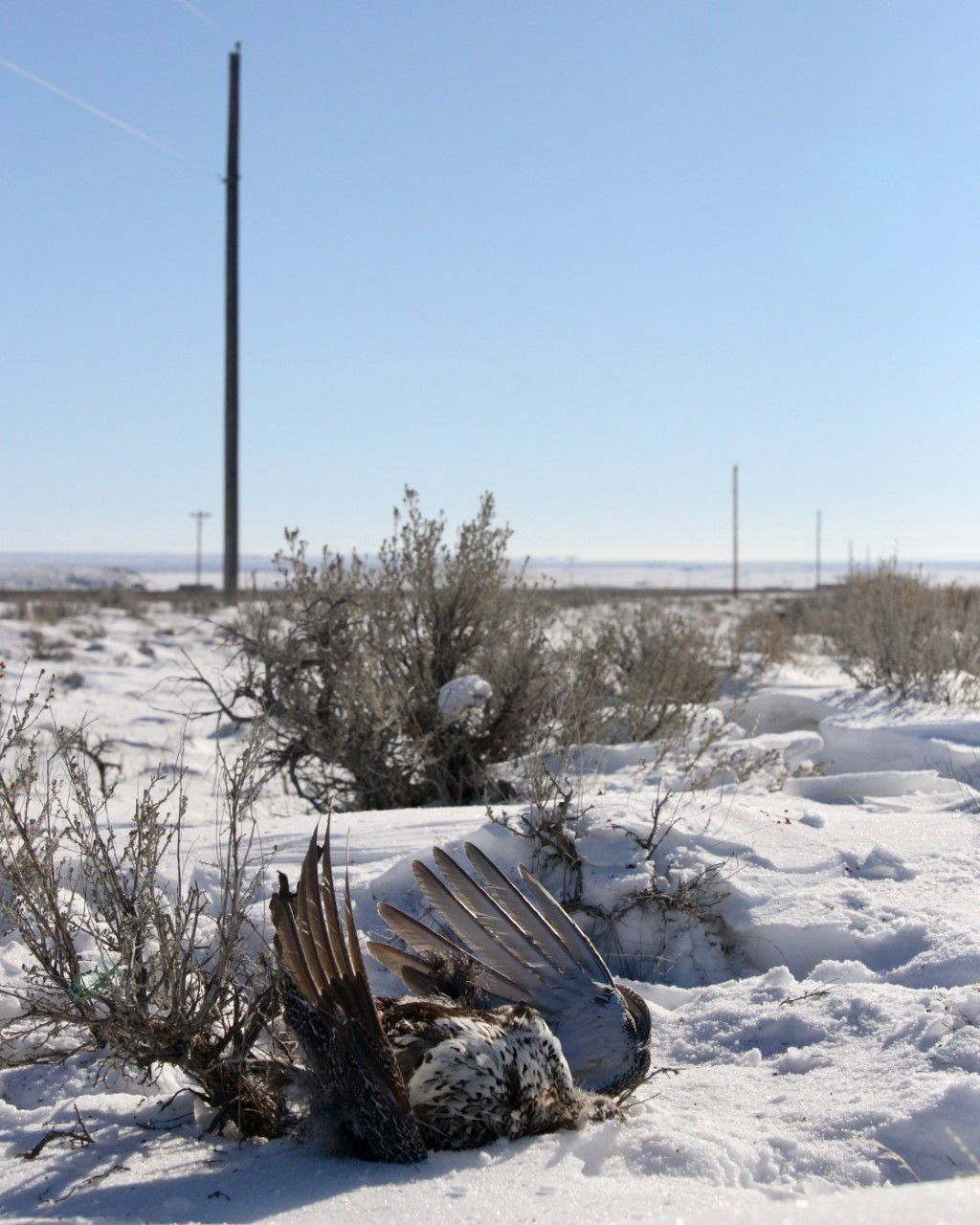 Sage-grouse infrastructure