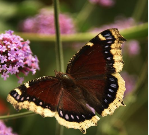 Butterfly Haven 2