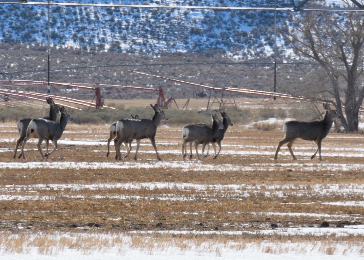 Deer habitat