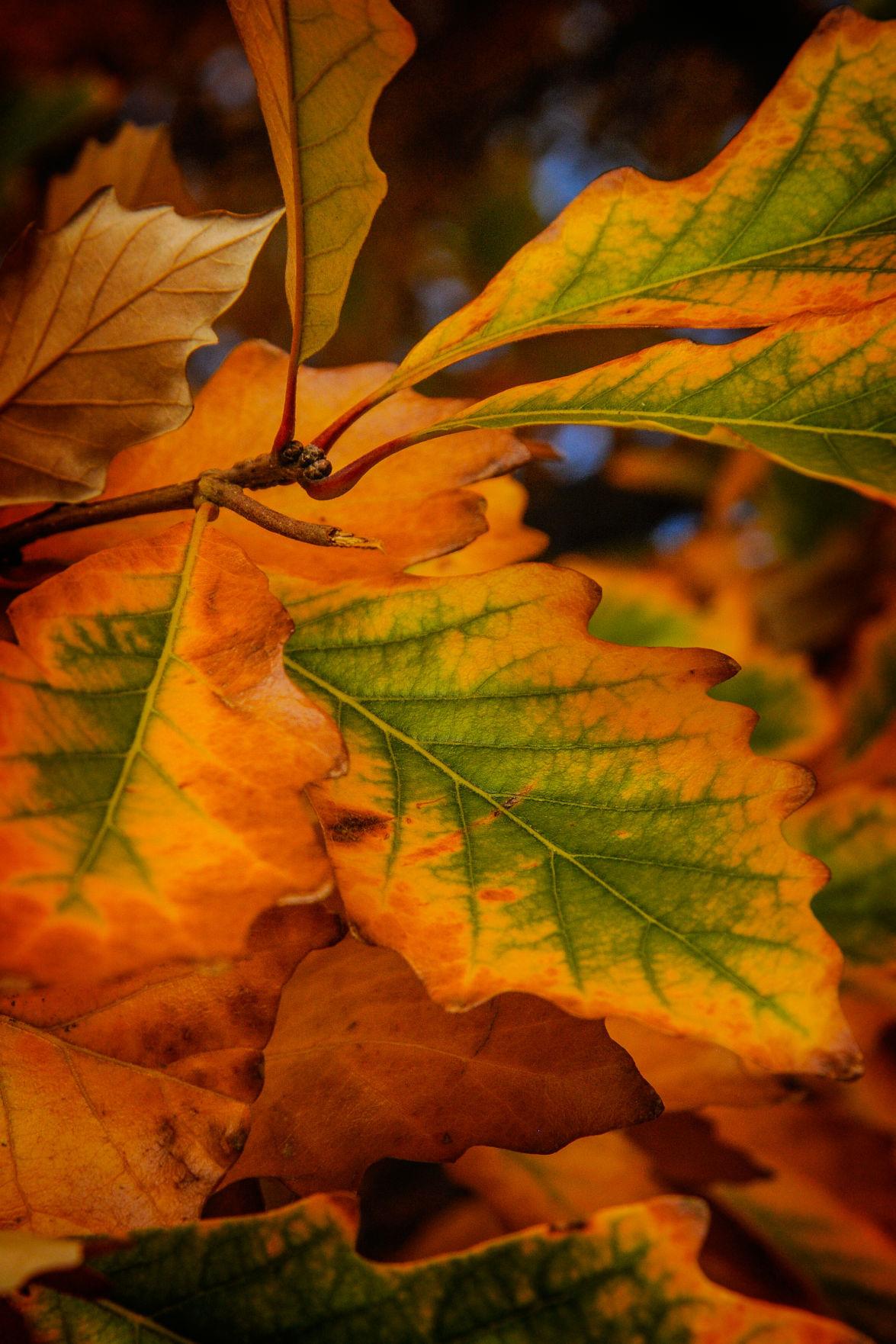 Ron Paarman - leaf.jpg