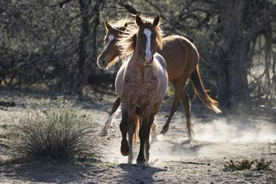 Wild Horses Adption Protections (copy)