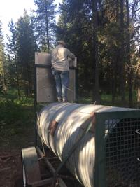 Grizzly bear trapped in Kilgore, Chinook opener