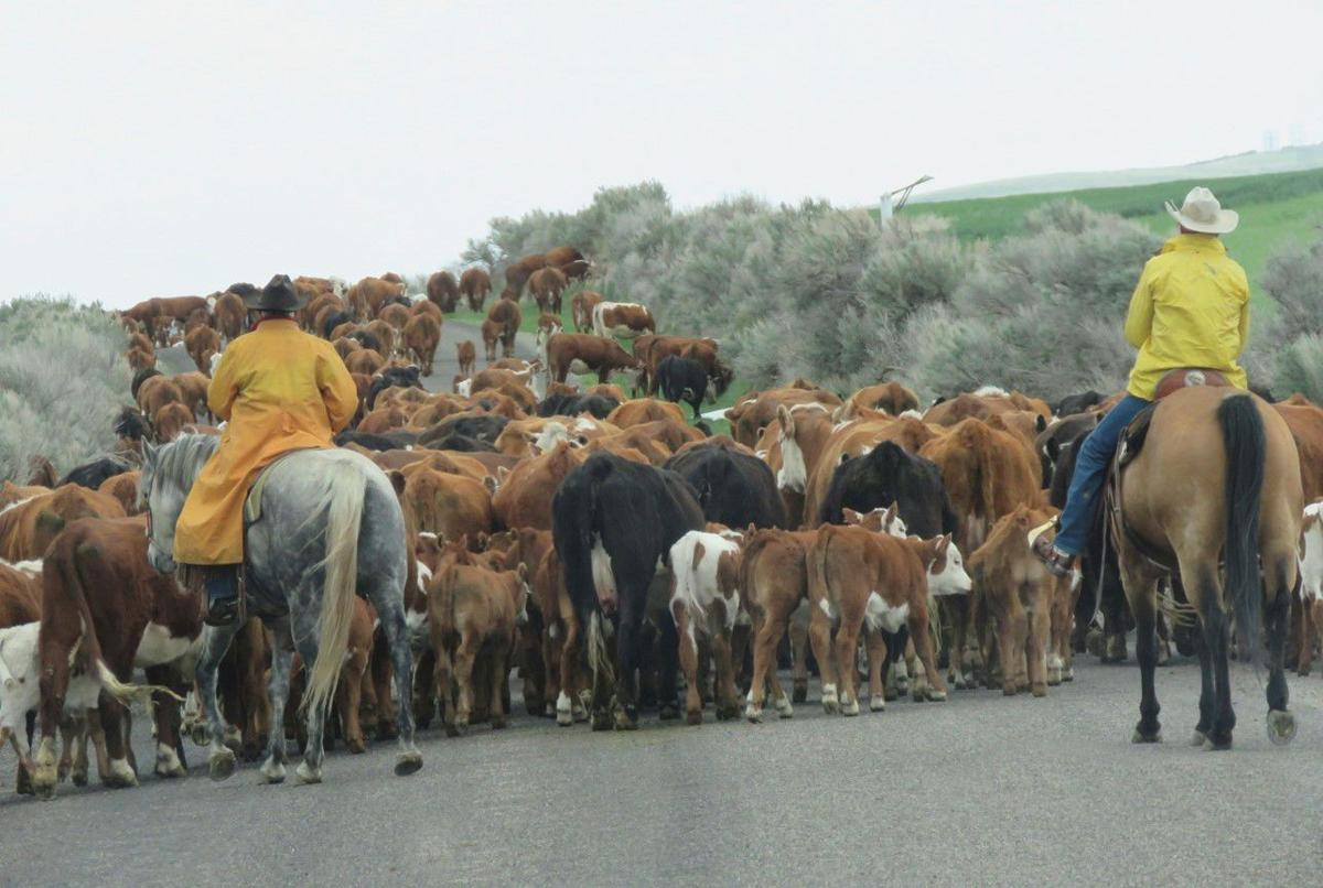 Living life on a cattle drive