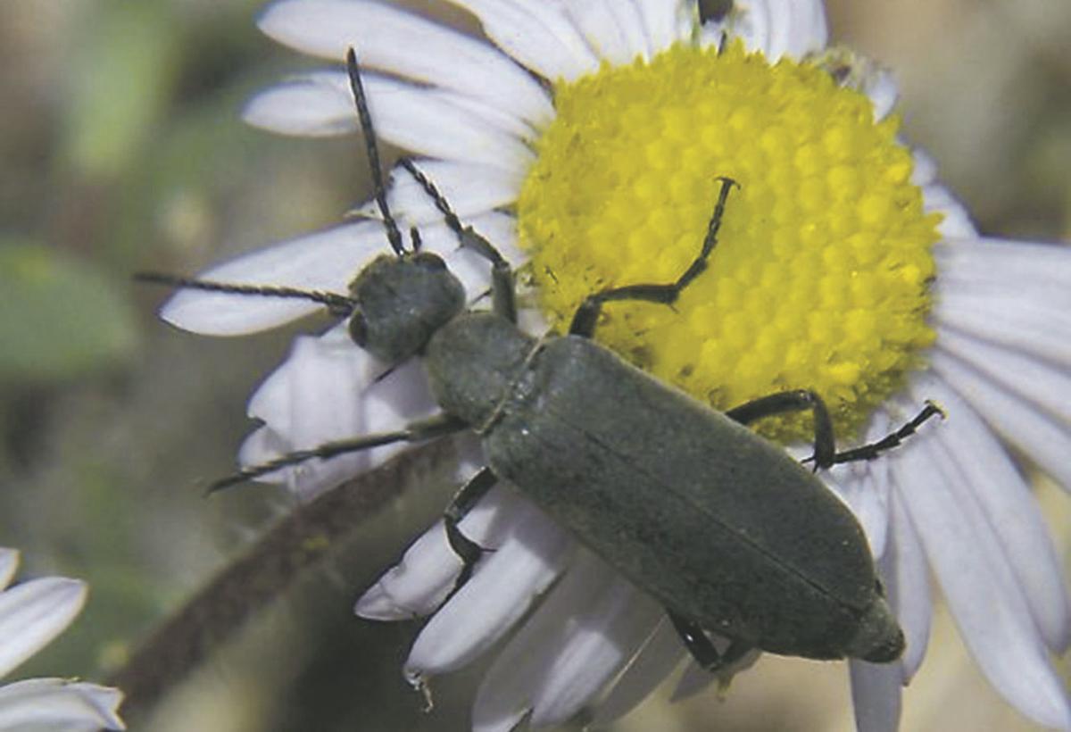 bug405