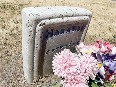 Harambe marker main