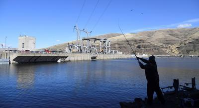 Snake River Dams Environmental Groups