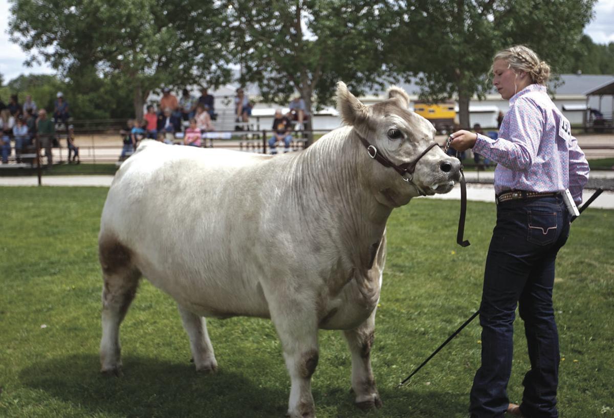Beef showmanship photo 2