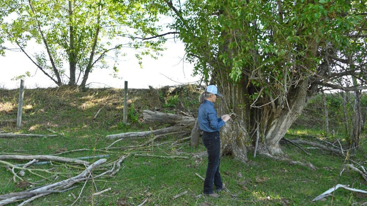 CONNELLY: Diversity of trees defines county's landscape