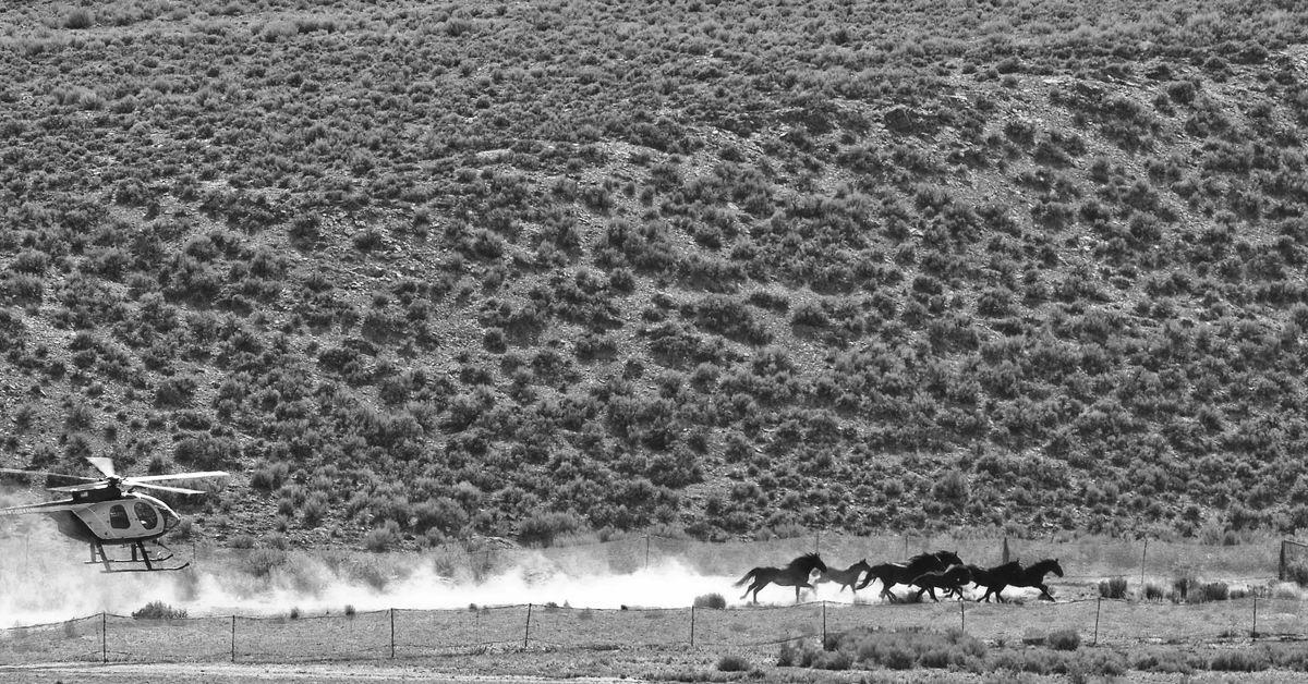 'Defiant Five' win temporary freedom in Wyoming wild horse roundup