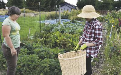 Community garden grows thousands of pounds of food | Crops