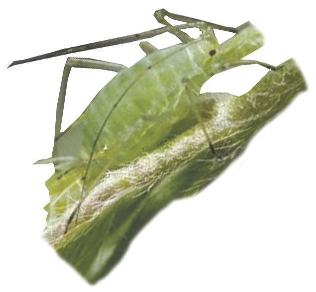 bug1109Cutout