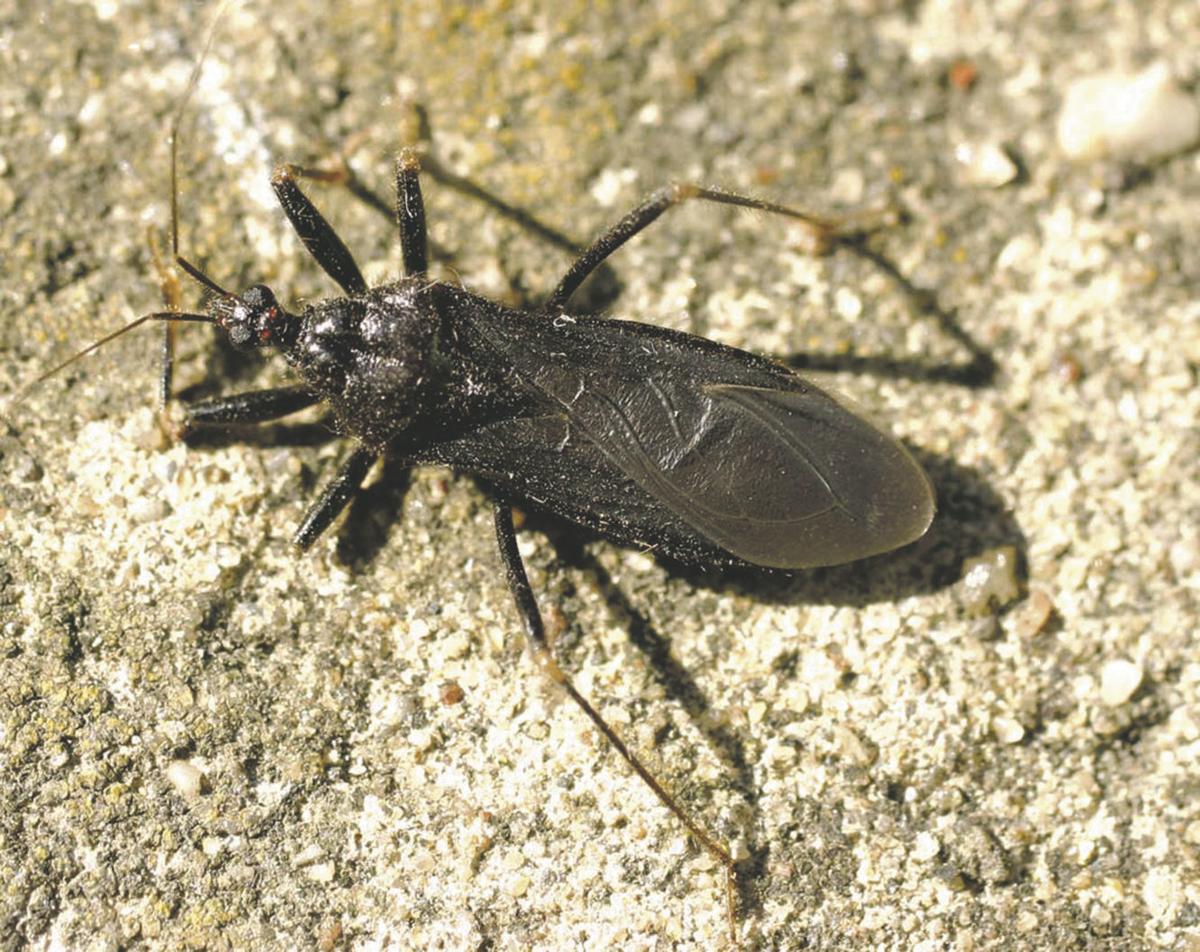 bug308