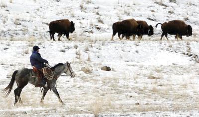 Exchange Yellowstone Bison Management Documents