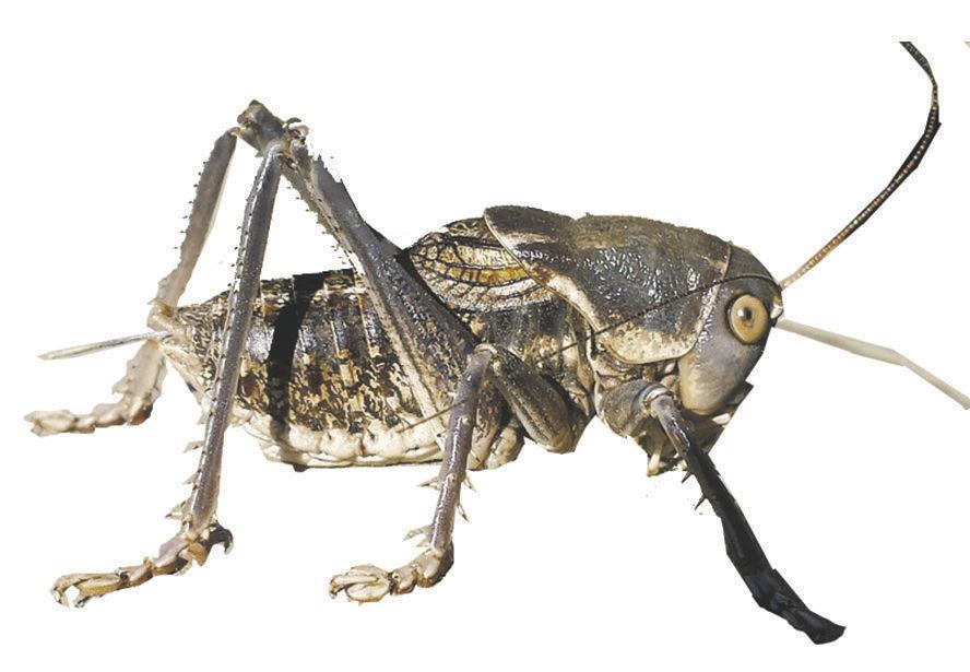 bug1026Cutout