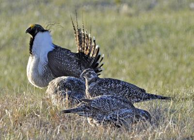 Bistate Grouse Listing Lawsuit
