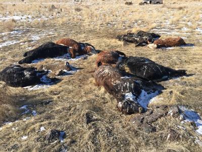 carcass dumping