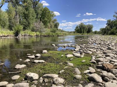 Climate Trout Stream Trouble