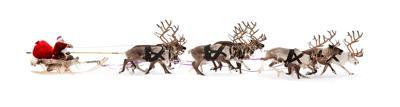 Santa Claus is sitting in a deer sleigh