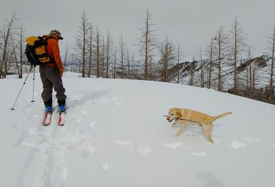 Snowpack Pat Fox Skis with Nugget