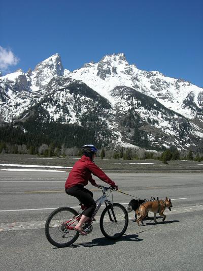 teton bike dogs